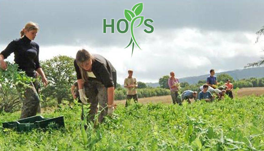 hops image